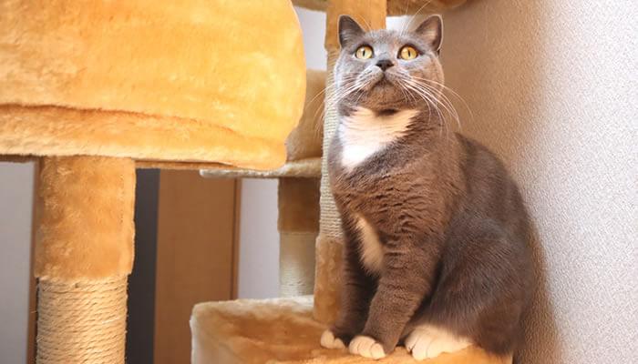 猫に合ったキャットタワーって何