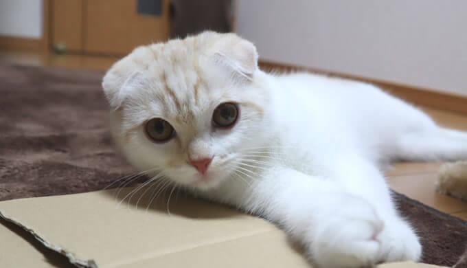 新入り猫レオ我が家に来て仲良くなるまで