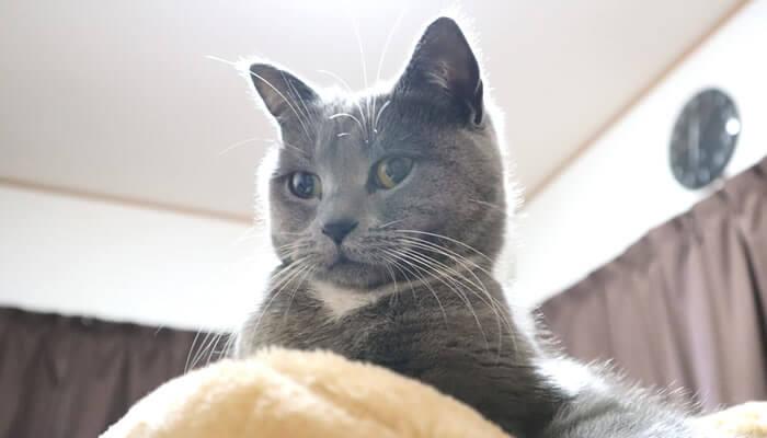新入り猫が来た初日の先住猫モモの様子