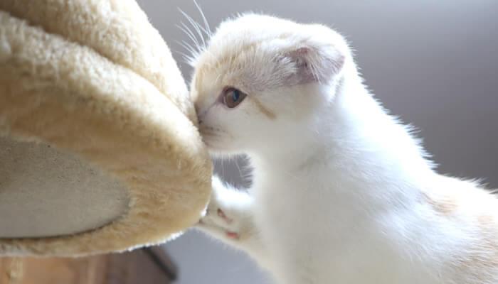 先住猫の匂いを嗅ぐ新入り猫のレオ