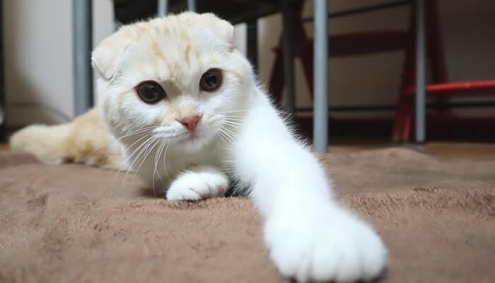 大はしゃぎの新入り猫スコのレオ