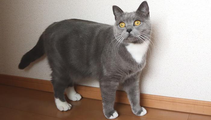 新入り猫レオの気配を感じる先住猫のモモ