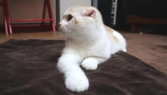 いろんなものに興味津々の生後5ヶ月の新入り猫レオ
