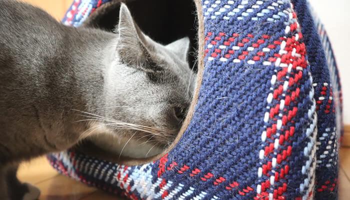 新入り猫レオのベッドの匂いを嗅ぐ先住猫モモ