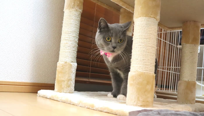 新入り猫レオの匂いを感じる先住猫のモモ