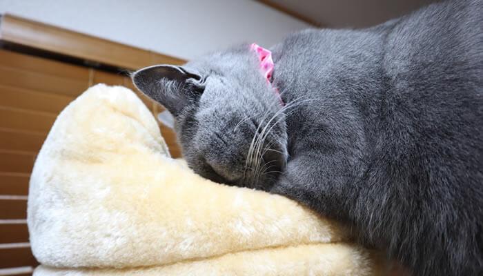キャットタワーの匂いを確認する猫のモモ