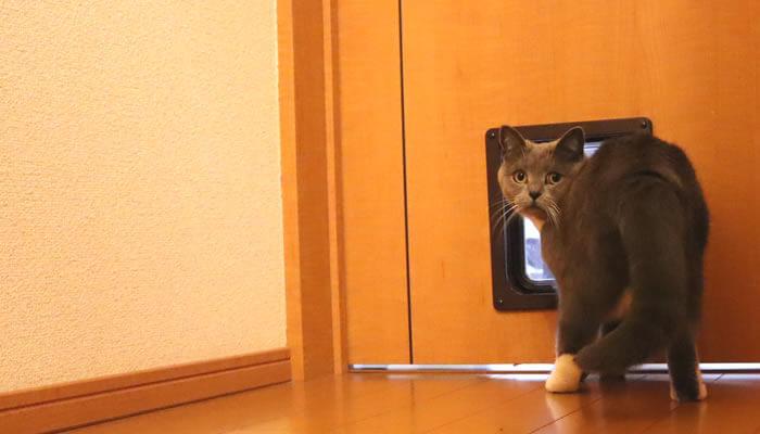 新入り猫がいる部屋に近づかない先住猫モモ