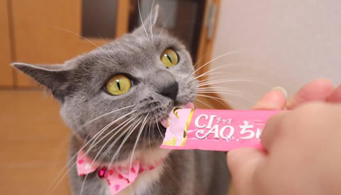 必死にちゅ~るを食べる猫のモモ