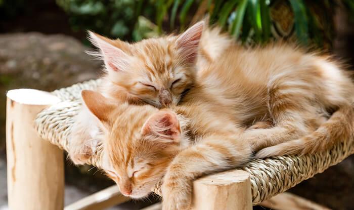先住猫と新入り猫の仲良し計画