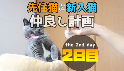 【多頭飼い2日目】先住猫が新入り猫の毛玉に威嚇して失敗!?
