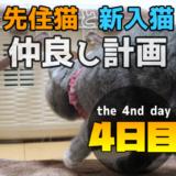 先住猫と新入り猫の仲良し計画4日目