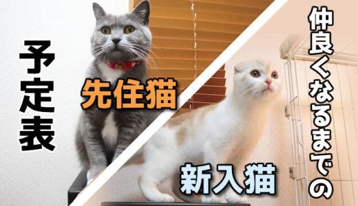 【予定表】先住猫と新入り猫が仲良くなるまでの計画表!