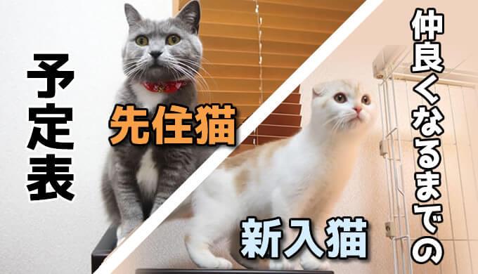【予定表】先住猫と新入り猫が仲良くなるまでの計画表