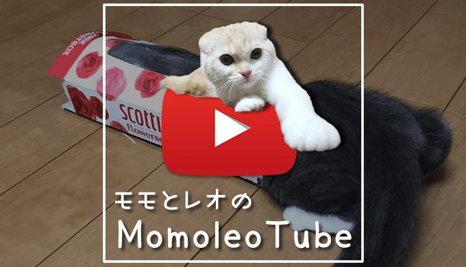 猫のモモとレオの動画-MomoleoTube モモレオチューブ