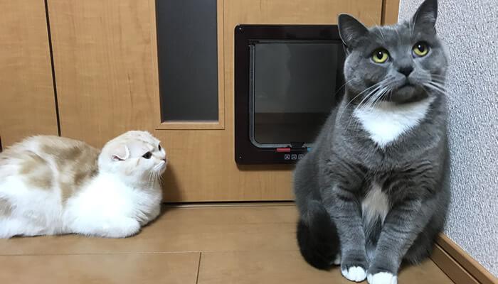 新入り猫が接近して固まる先住猫