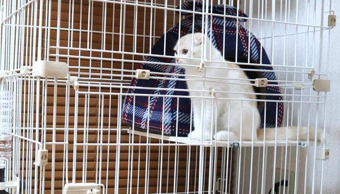 ケージに入った新入り猫レオが先住猫モモと対面