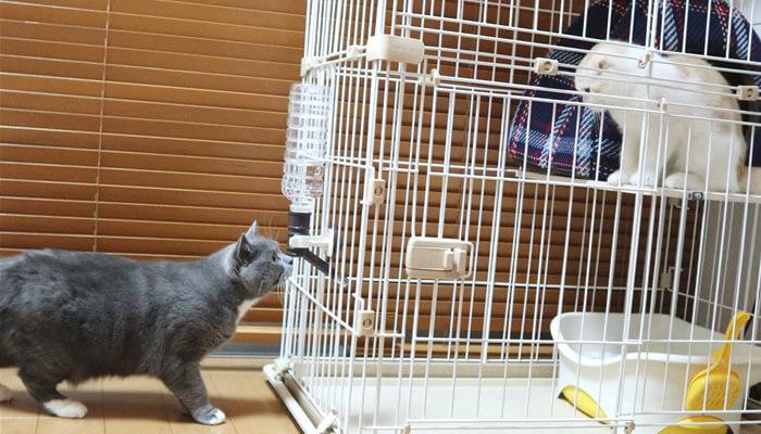 新入り猫レオと目が合い固まる先住猫モモ