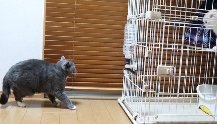 新入り猫レオに気付いてゆっくり逃げる先住猫モモ