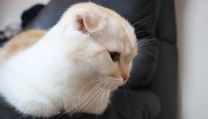 先住猫がくるのを心待ちにしている新入り猫レオ