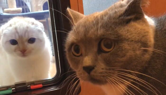 猫ドア越しに新入り猫と対面しビビる先住猫モモ