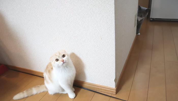 隅っこで新入り猫の様子をうかがう先住猫