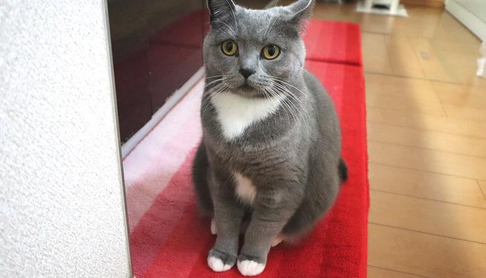 新入り猫に警戒してキッチンの隅で固まる先住猫