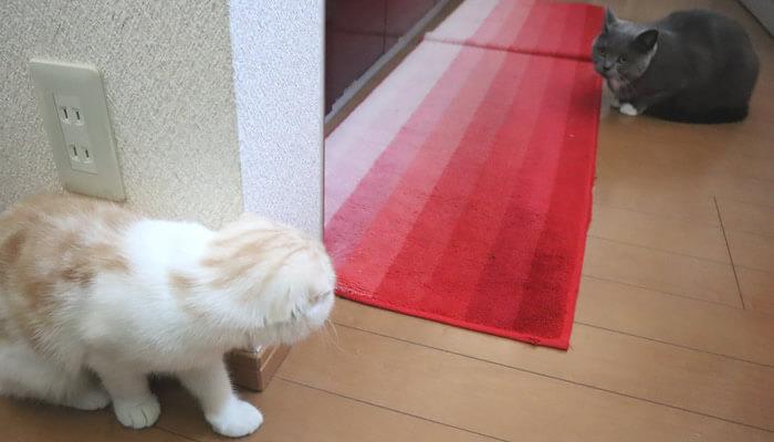 先住猫にそっと近づく新入り猫