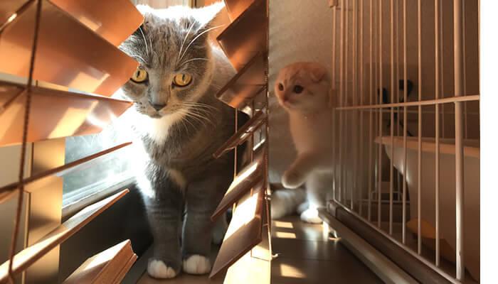 ニャルソックしようと思ったのに新入り猫がやってきてビビる先住猫