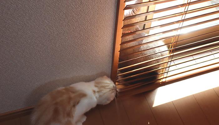 先住猫のお尻をクンクンする新入り猫