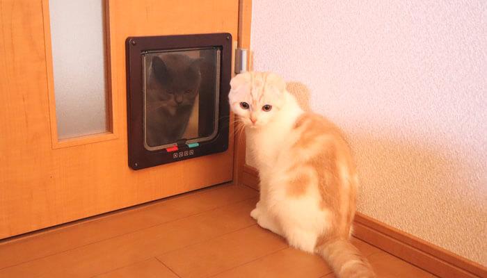 猫ドア越しに対面する先住猫と新入り猫