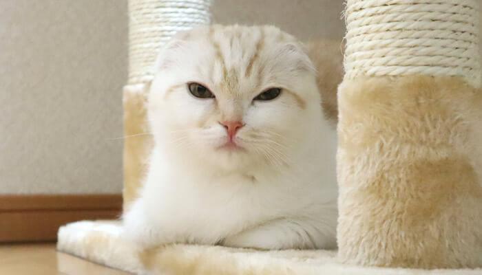 先住猫と新入り猫が同じ部屋で対面