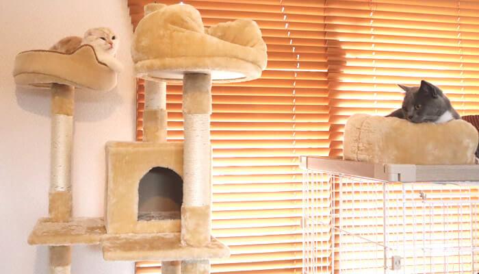 多頭飼い13日目の先住猫と新入り猫の距離感