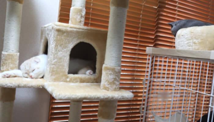 先住猫と新入り猫の距離感