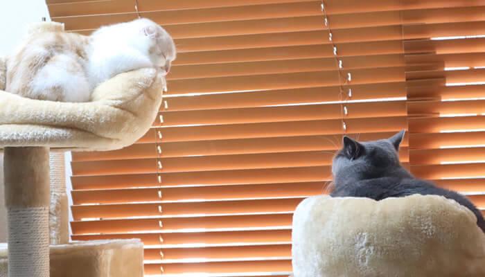 同じ部屋で寝る先住猫と新入り猫