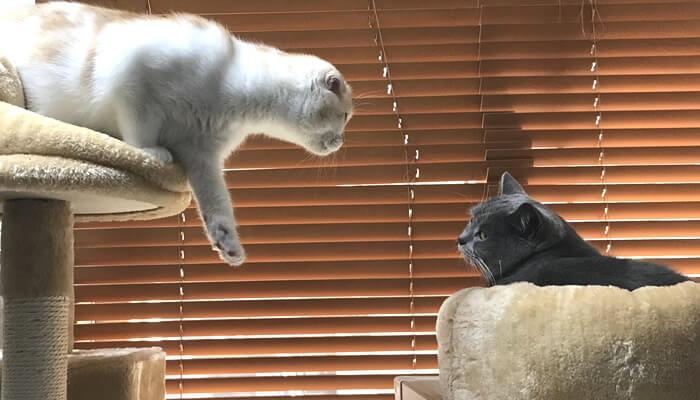 先住猫に触りたい新入り猫
