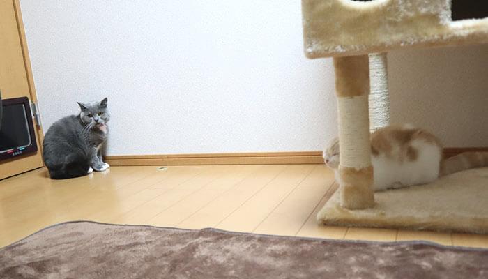 先住猫と新入り猫の8日目の距離感