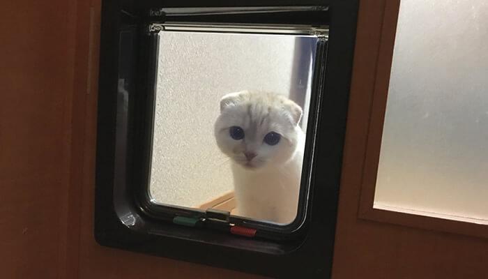 猫ドア越しに先住猫を探す新入り猫