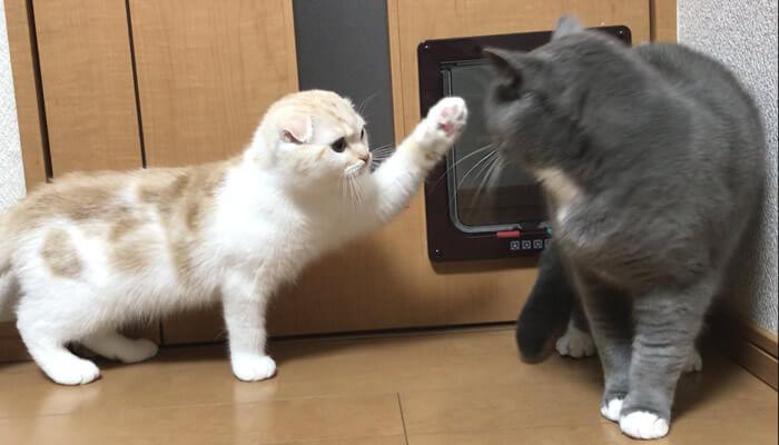 先住猫を触りたい新入り猫