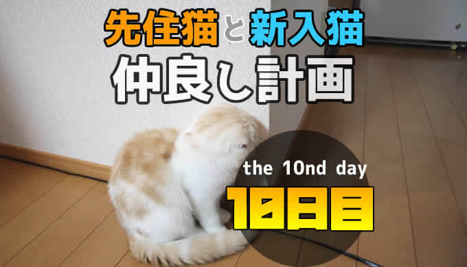 先住猫と新入り猫の仲良し計画10日目 軍事境界線