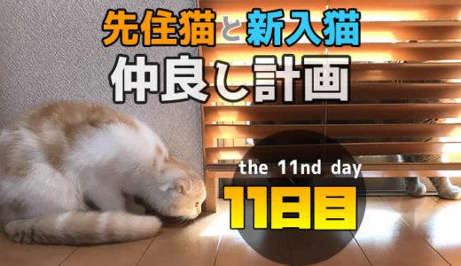 【多頭飼い11日目】先住猫と新入り猫がブラインド越しで急接近!