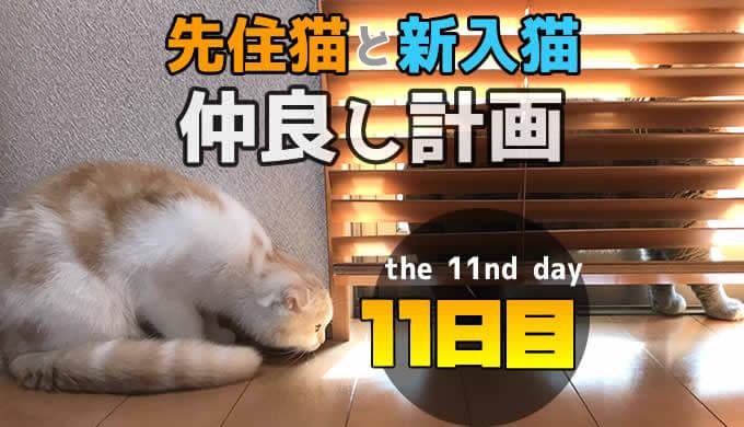 先住猫と新入り猫の仲良し計画11日目 ブラインド越しに急接近