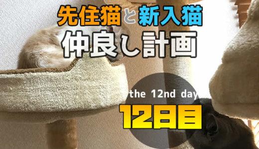 【多頭飼い12日目】先住猫と新入り猫が鼻クンクンで初めて挨拶できた日!