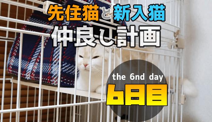 先住猫と新入り猫の仲良し計画6日目の対面