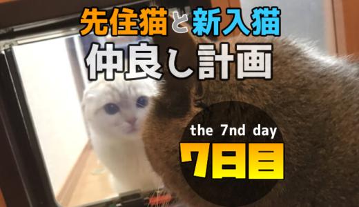 【多頭飼い7日目】先住猫と新入り猫が猫ドア越しにハプニング対面!?