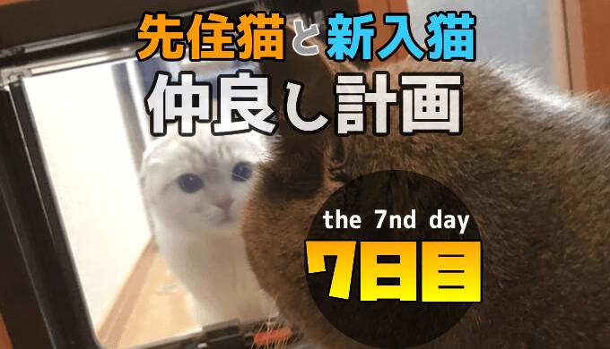 先住猫と新入り猫の仲良し計画7日目に猫ドア越しに対面