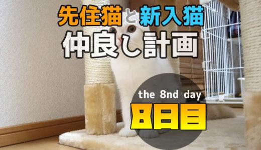 【多頭飼い8日目】先住猫と新入り猫が直接対面!追いかけっこする?
