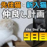 先住猫と新入り猫の仲良し計画9日目 直接対面で猫パンチ