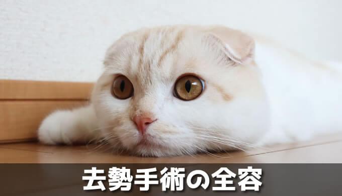 オス猫の去勢手術