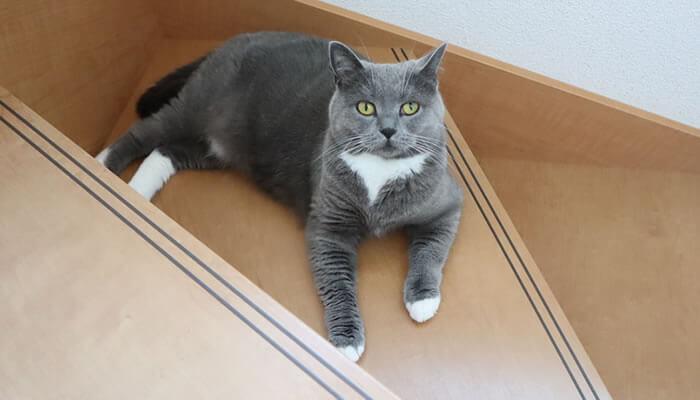 去勢手術後の居住猫の距離感