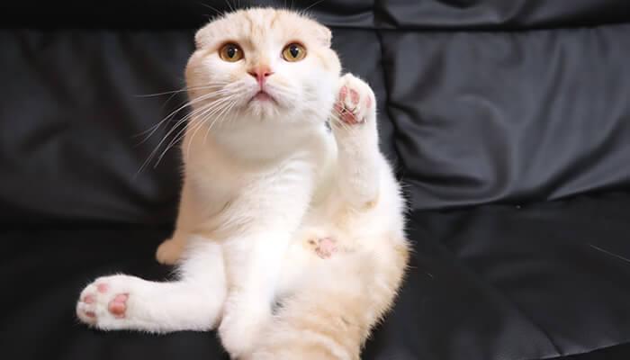 傷口を舐める猫